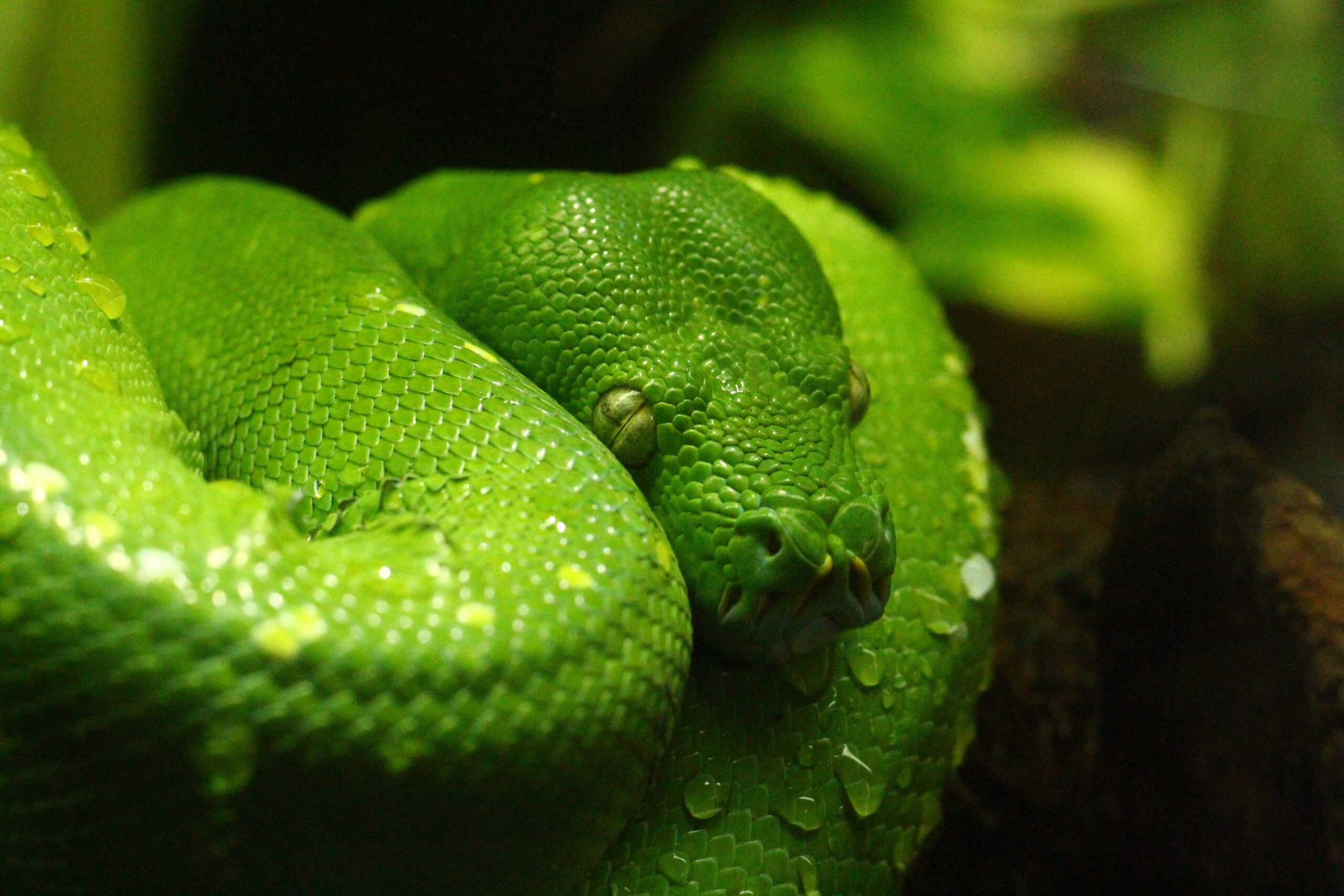 New Python 3.10 Features You Must Try Out